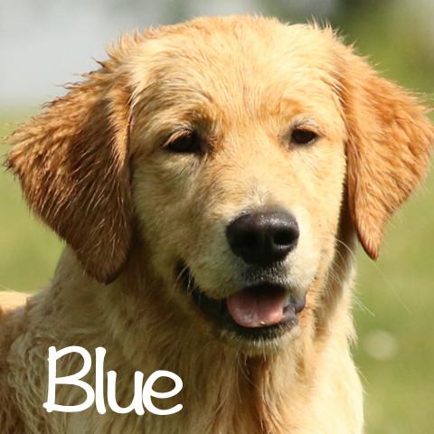 Blue al cubo