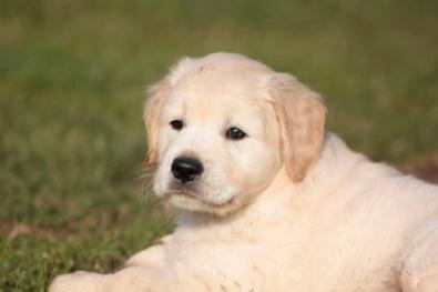 Male puppy - Il maschio