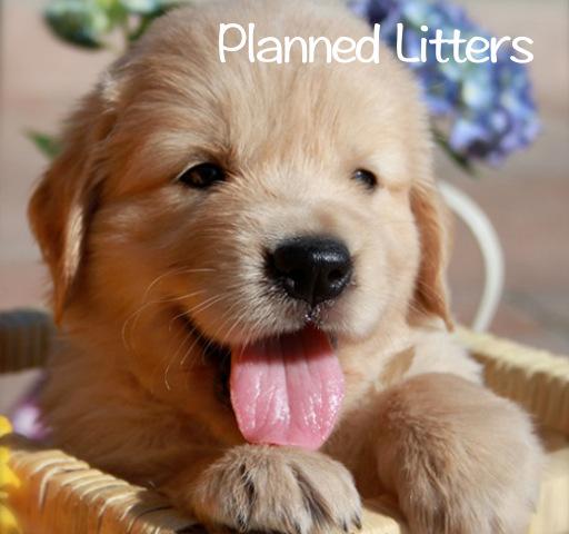 planned-litters