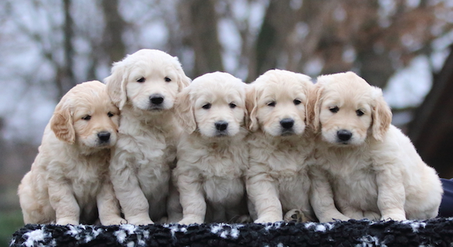 cuccioli Happy x Dempsey