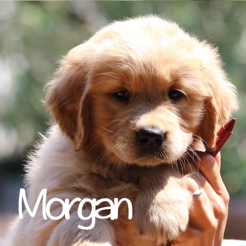 Morgan al cubo