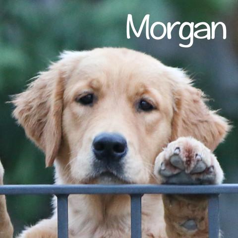 Morgan al cubo2