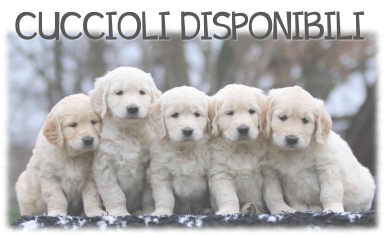 home page cuccioli