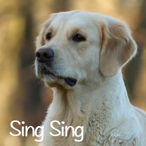 Sing Sing al cubo2