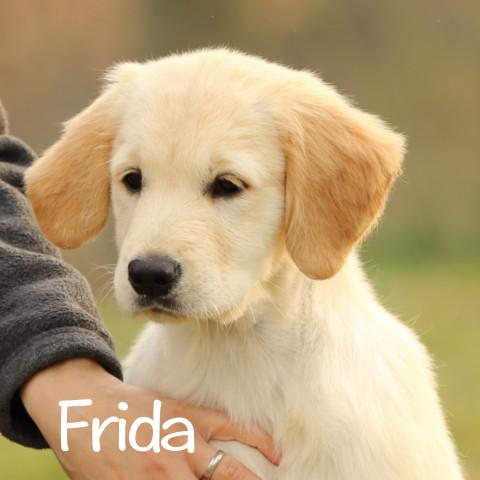 Frida al cubo