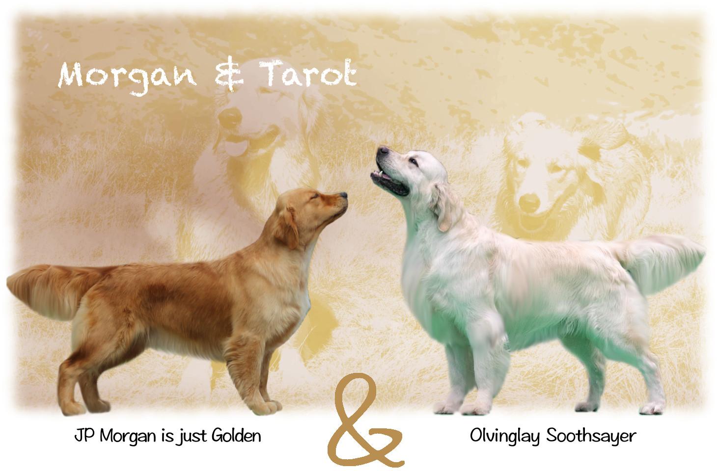 Morgan x Tarot