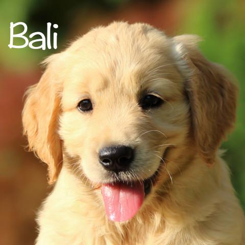 Bali al cubo